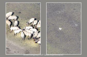 collage4_resultaat